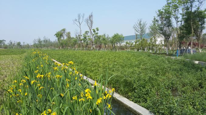 湿地污水处理-2