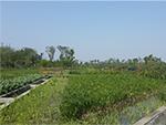 湿地污水处理1